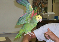 Parrot in visible light