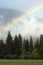 Rainbow rising over a misty forest
