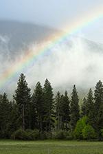 L'arcobaleno sorge su una foresta nebbiosa